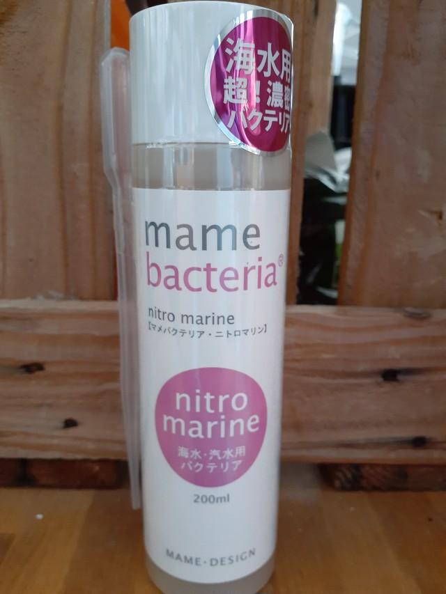 マメバクテリアマリン