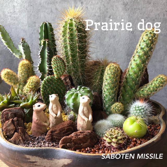prairie dog プレーリードッグ