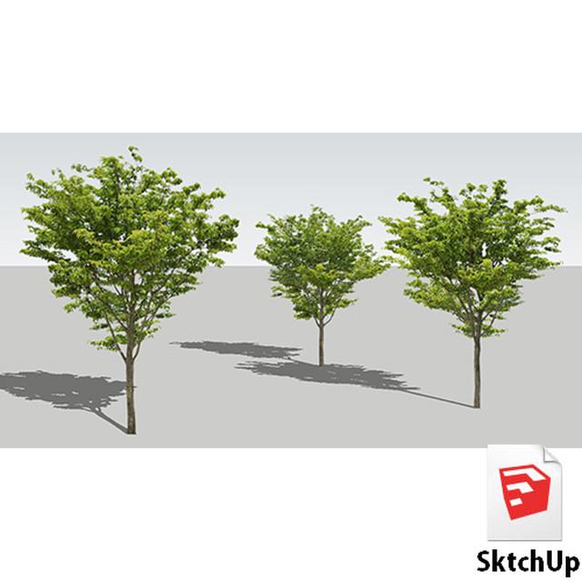 樹木SketchUp 4t_003 - メイン画像