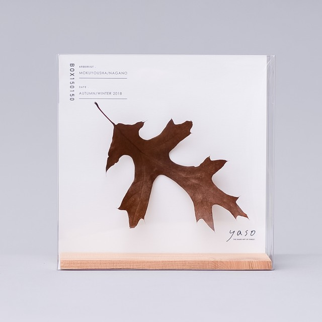 1125_ピンオークの葉