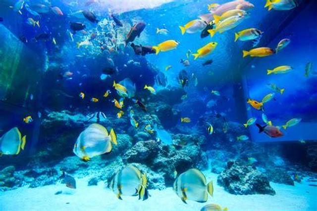 海が好きな方々の集い!H30.4.18(水)20時~22時≪男・女≫