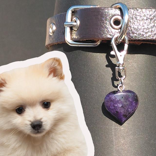 ソーダライトハート:犬用首輪チャーム