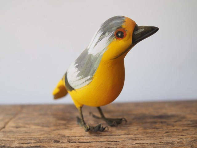 indian bird - Scarlet minivet(サンショウクイ)