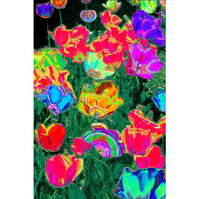 Photo-CG - チューリップ 9 (Tulip 9) - Original Print A2 Size