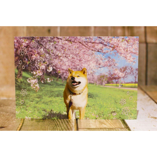柴犬/ポストカード/浜松雑貨屋 C0pernicus