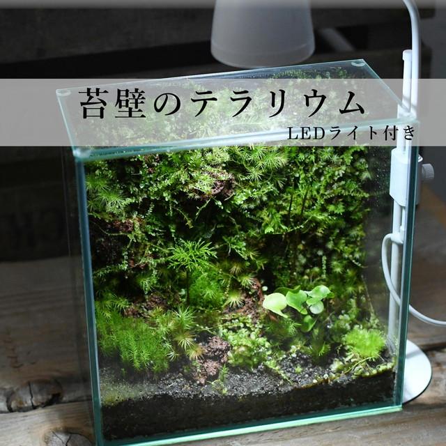 苔壁のテラリウム【苔テラリウム・現物限定販売】◆LEDライト付き 12.1#5