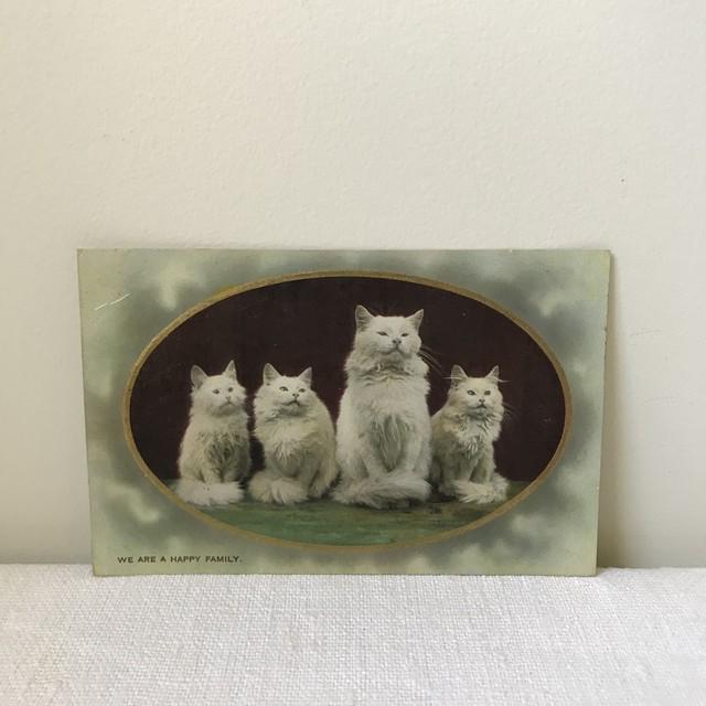 猫のポストカード5