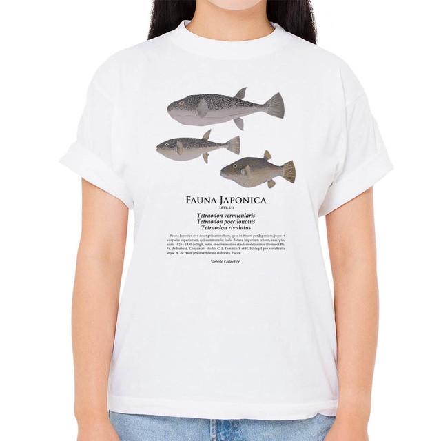 【ショウサイフグ・コモンフグ・キタマクラ】シーボルトコレクション魚譜Tシャツ(高解像・昇華プリント)