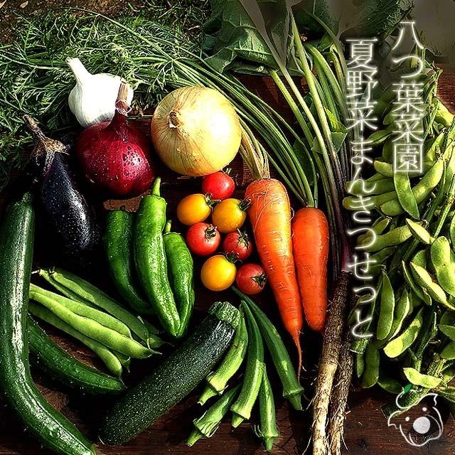 八つ葉菜園 夏野菜まんきつせっと