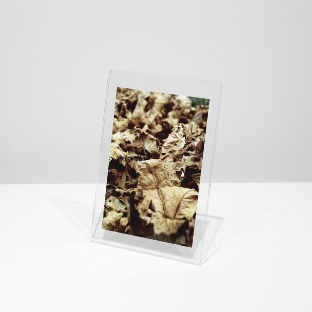 ポストカード「No.141 落葉の絨毯 Vol.1」10枚セット