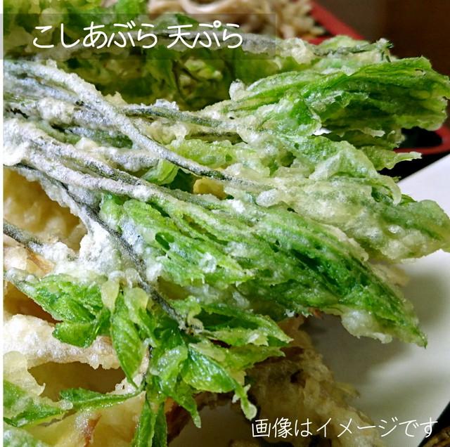 5月の山菜 こしあぶら 約50g 朝採り直売野菜 5月2日発送予定