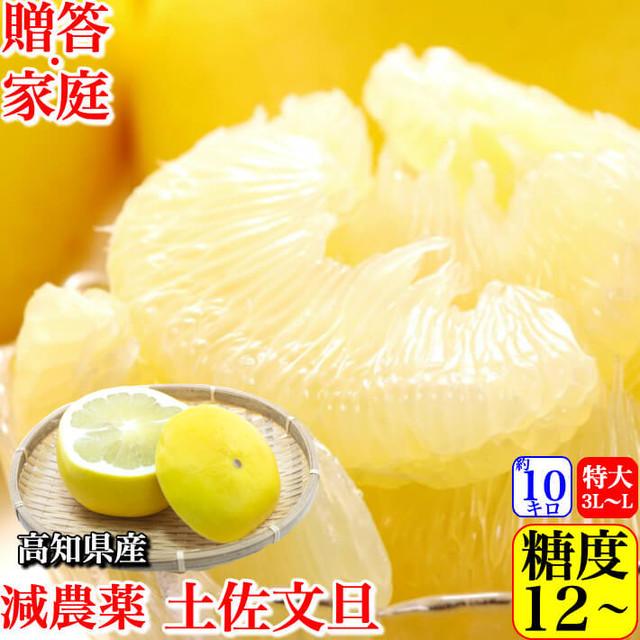 減農薬 土佐文旦 約10kg 贈答・家庭用 2L-L  糖度12度 高知県産 小松さんの減農薬ブンタン  送料無料