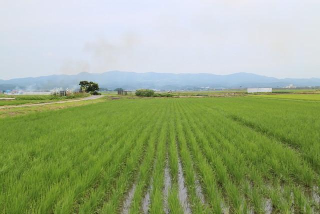 平成30年度 青森県産あきたこまち(無農薬・無化学肥料)白米10キロ