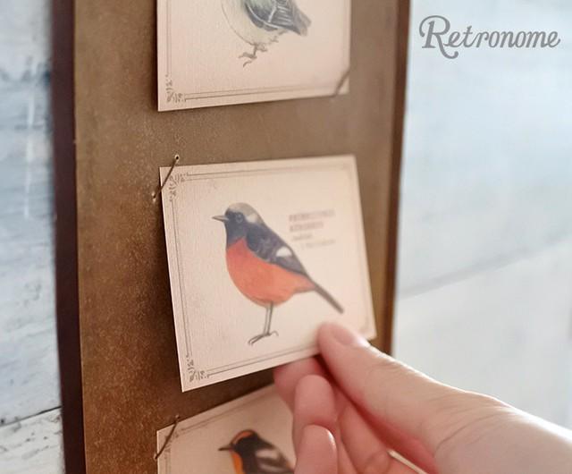 インテリアにもなる*野鳥の図鑑風メッセージカード