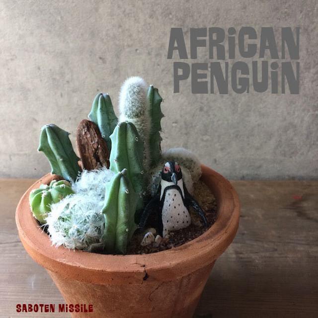 アフリカに住むペンギン【 ケープペンギン 】