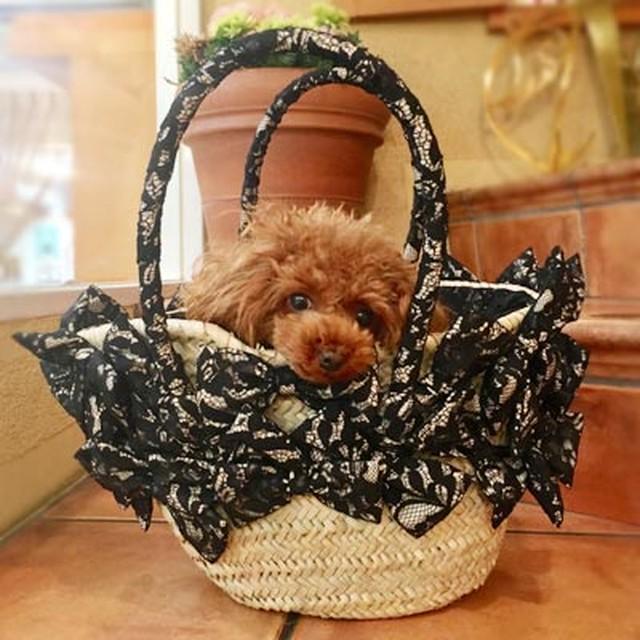Dog-kiss・Luxury・リバーレース・かごバッグ【 Lサイズ】