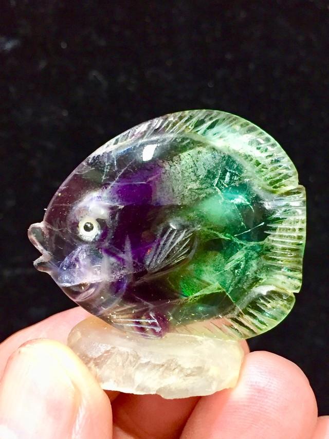 6) フローライト「熱帯魚」