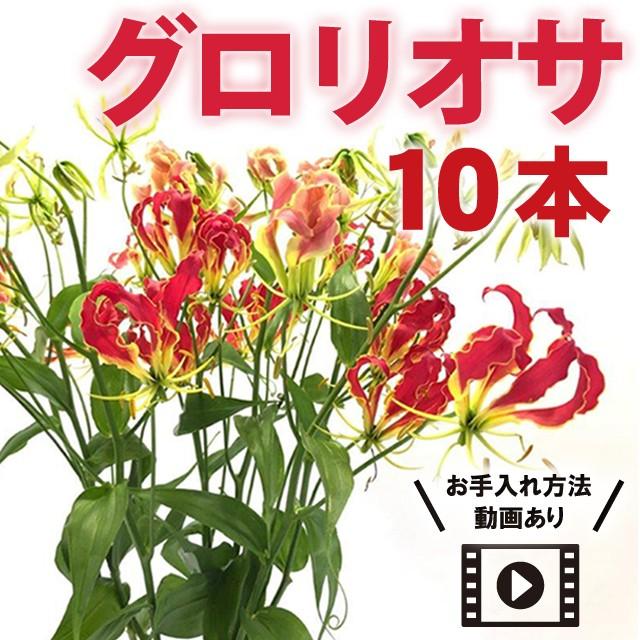 【栄光のお花】グロリオサ 10本★コロナ救済★《送料無料》