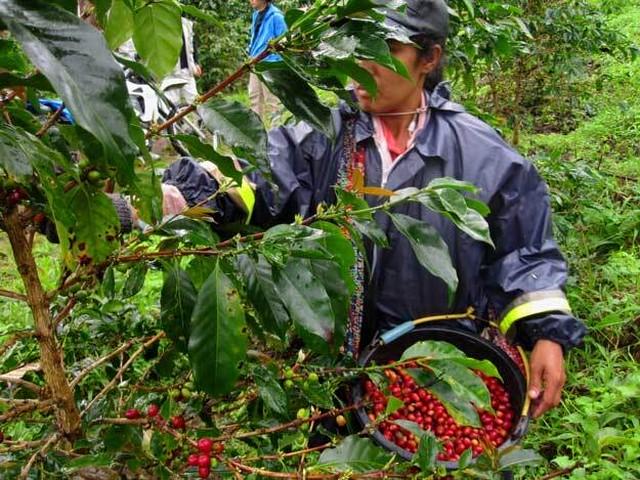 【深煎り】インドネシア / ワハナ農園 ナチュラル