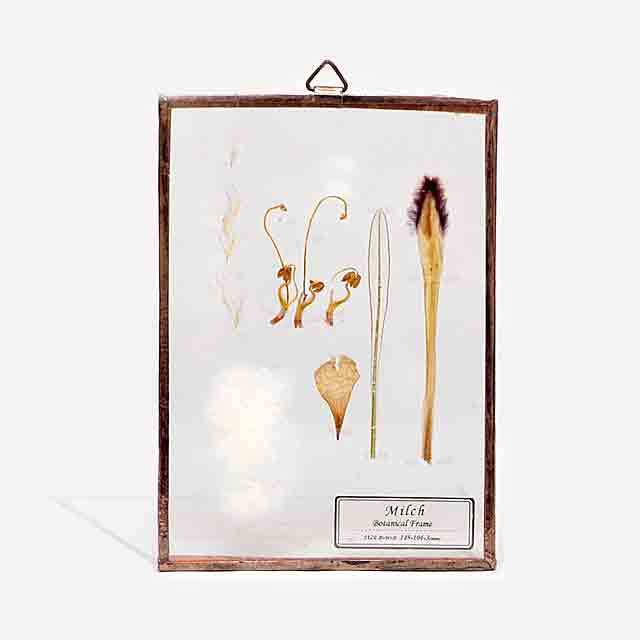 Botanical Frame S025 - Gold