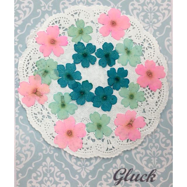 コンパクト押し花 バーベナMix 少量をパックにしてお届け! 押し花素材