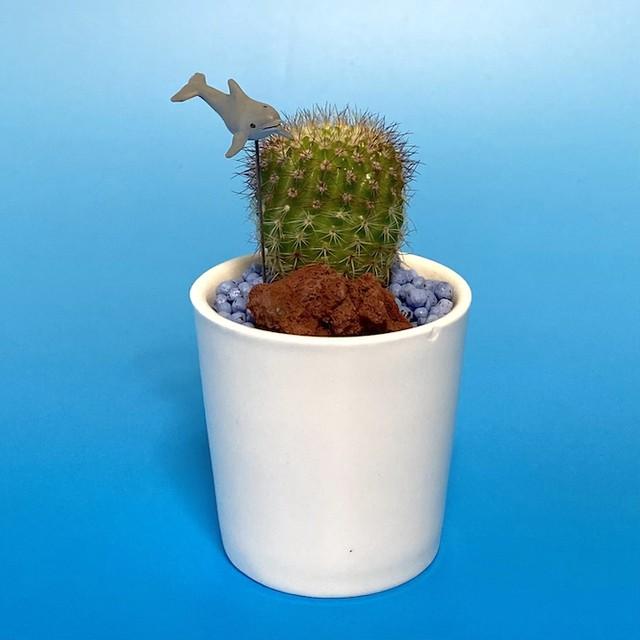 【受注生産品】イルカ サボテンsu-01iruka イルカ 観葉植物 夏 さぼてん カクタス インテリア グリーン ミニチュア かわいい 動物 フィギュア