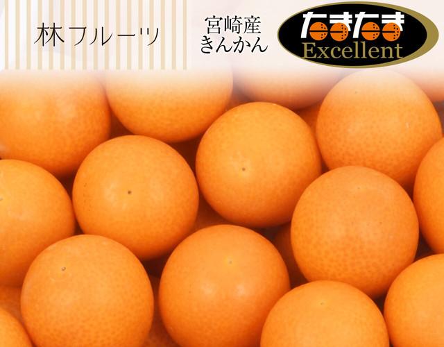 宮崎県産 たまたまExcellent〔送料無料、たまたまexcellent、たまたま、完熟きんかん、きんかん、柑橘、詰め合わせ、贈答用〕