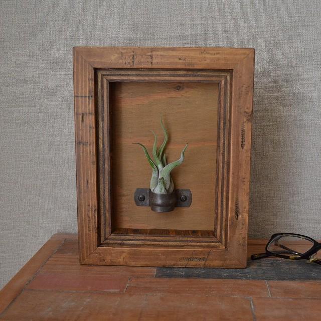 [壁掛け]植物を飾る額縁 3(size:S)