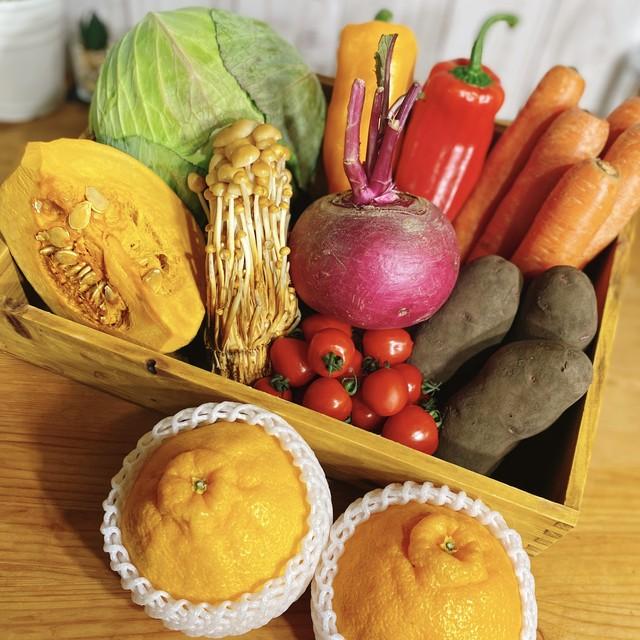 【定期購入・3か月に1回】のら野菜お任せプレミアムセット