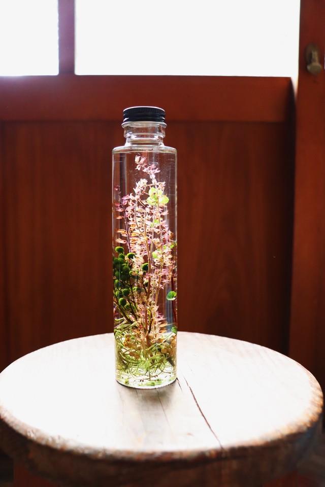 Herbarium48