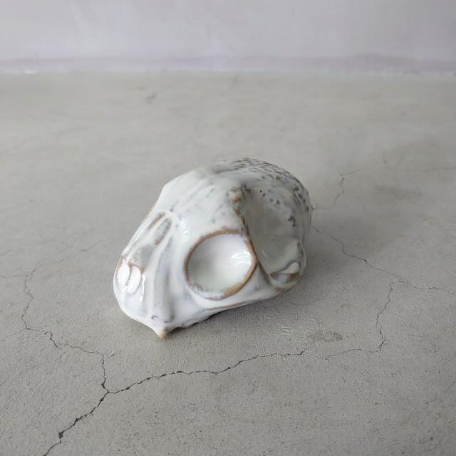 Baby Cat Skull
