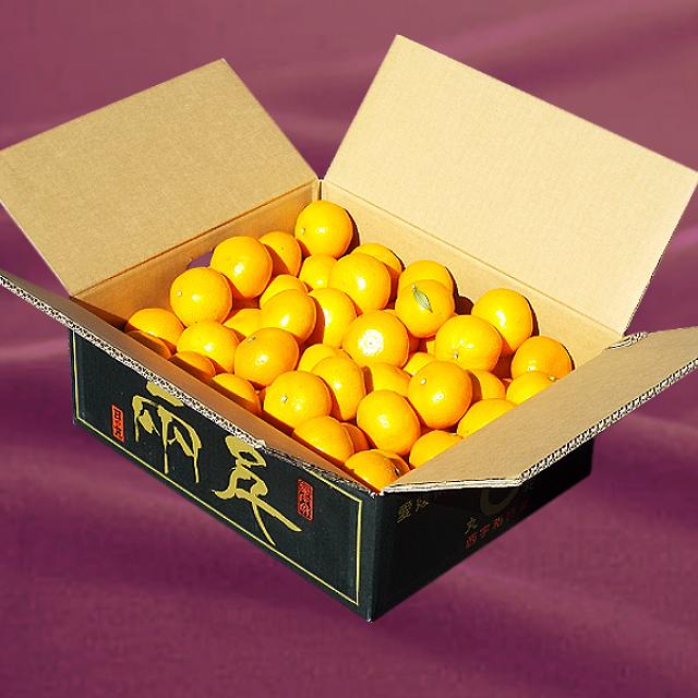 「日の丸みかん 千両 優品」Mサイズ 10kg