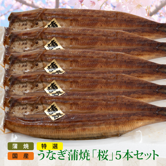 SALE特選 国産うなぎ蒲焼(桜)5本セット