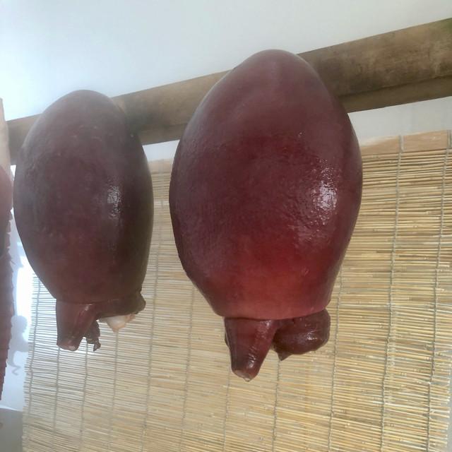 真タコ 頭(約1.6〜2.0kg)