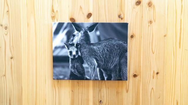 【展示品60%off】Baby kangaroo with mom × Canvas panel