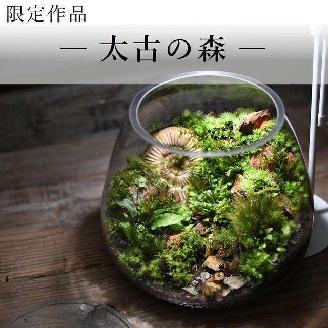 作品名− 太古の森 −【苔テラリウム・現物限定販売】20.07.22#2