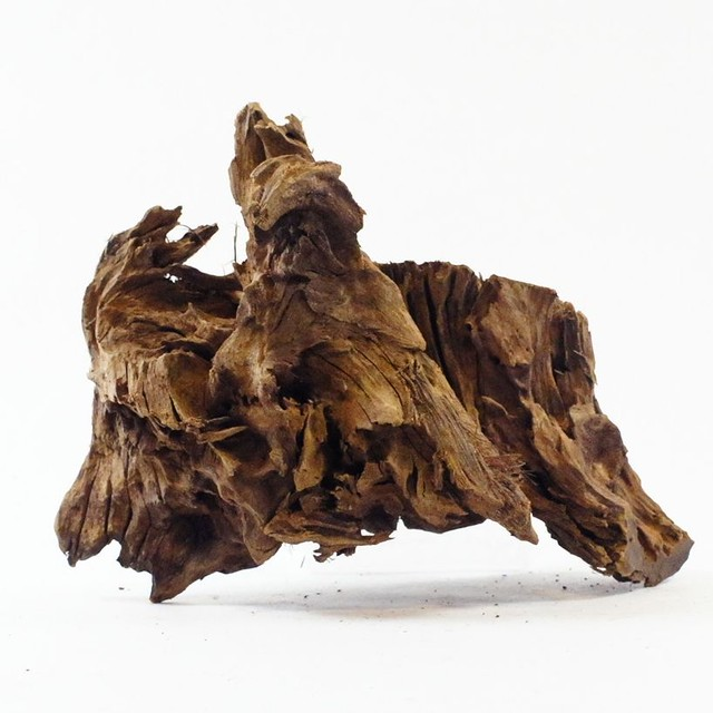 25cm弱 塊系流木 煮沸済 MBW067 アクアリウム  苔テラリウム