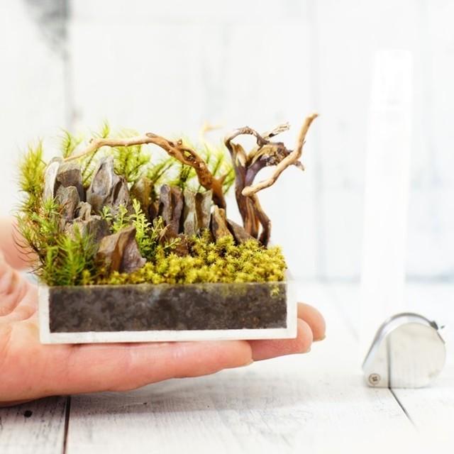 超ミニサイズ テラリウム 苔盆景 流木と気孔石