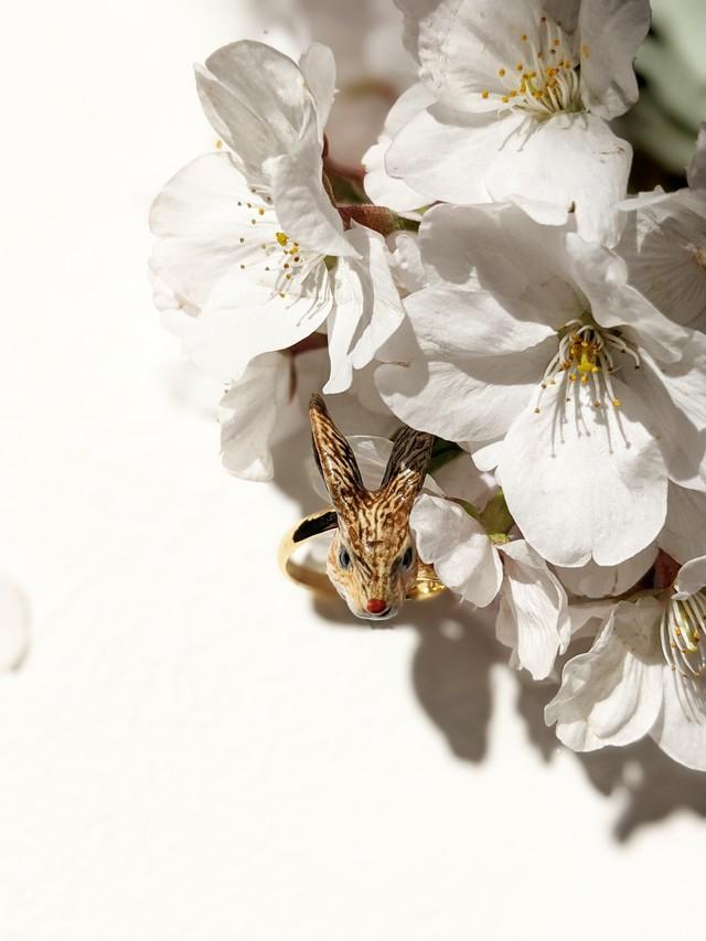 【Nach】 Brown rabbit ring
