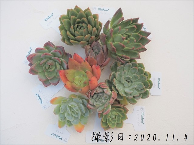 【SALE&送料無料】韓国苗9品種セットB 多肉植物
