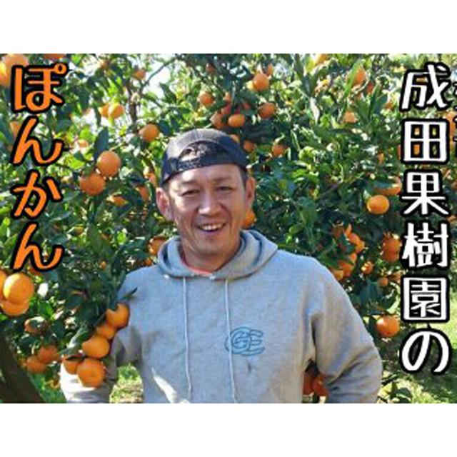 成田果樹園のぽんかん5kg(家庭用)