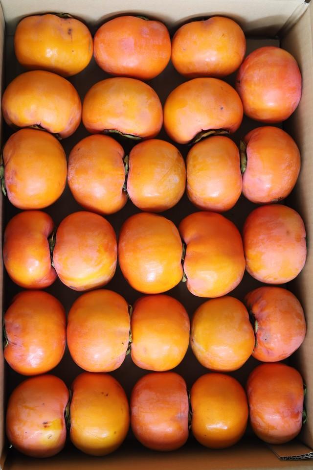 【得用】樹上完熟富有柿 6.5kg箱
