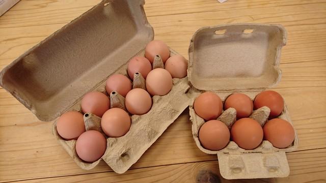 平飼い卵 16個