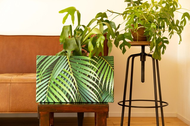 【GOODS IN STOCK 20%OFF】Palm leaf × Canvas panel