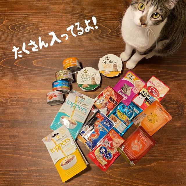 NEW!猫のフードセット<2000円分入ってこのお値段!!>