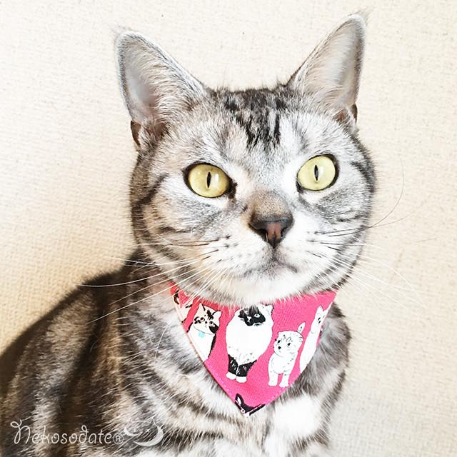 【こっち見てない猫たち柄】猫用バンダナ風首輪/選べるセーフティバックル 猫首輪
