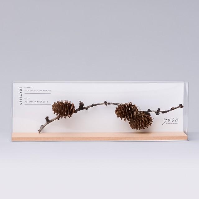 1213_カラマツの枝