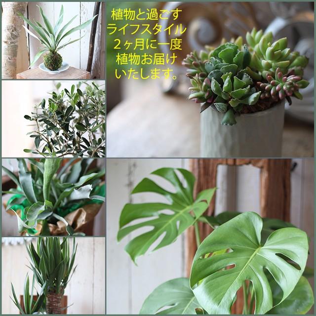 植物のある暮らしを楽しむ。膈月ごと年6回、植物を届けます  「植物と過ごす1年間 インドアグリーンライフ」