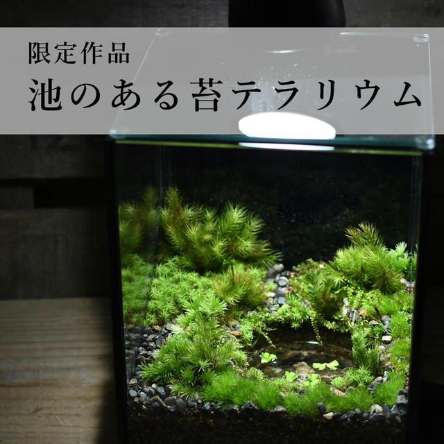 池のある苔テラリウム【苔テラリウム・現物限定販売】1.9#3