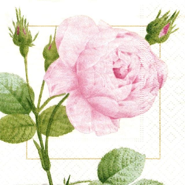 新入荷【Caspari】バラ売り1枚 カクテルサイズ ペーパーナプキン REDOUTE ROSE ピンク